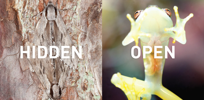01_Global-Shift_Hidden-to-Open